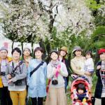 PIC magazine名古屋写真部で山崎川四季の道へ桜を見に行って来ました!