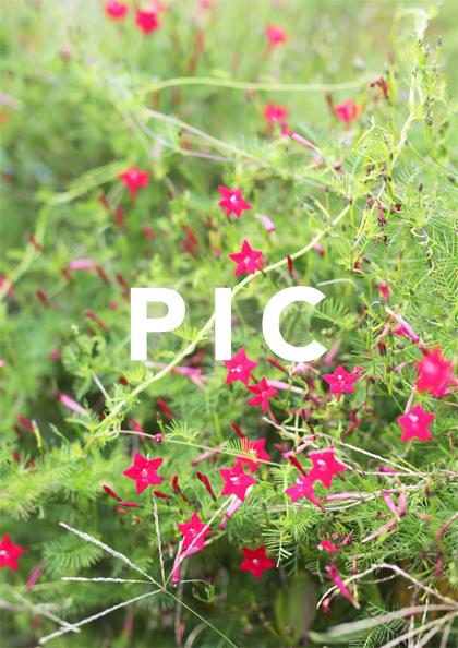 PIC04