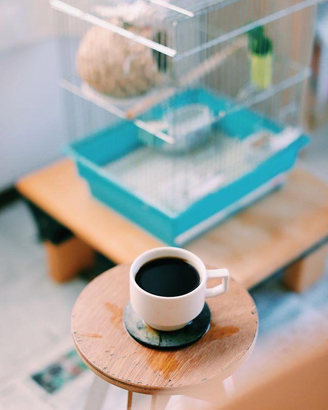 小鳥のさえずりで目覚めたグッドモーニング。幼稚園の夏休みのお楽しみ企画で十姉妹と1週間一緒に暮らすというのが始まった!急にバサバサー!ってなるのでびっくりしてコーヒーこぼした。うまい! (Instagram)